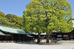Meiji Jingu 004