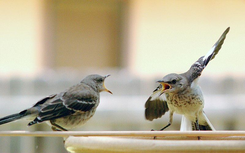 Mocking Bird Argument