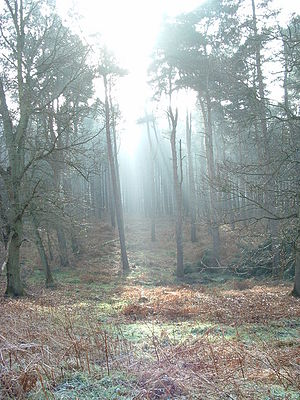 English: Morning Sunlight Morning sunlight and...