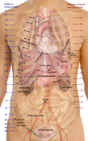 Functions of the spleen include all of those below except