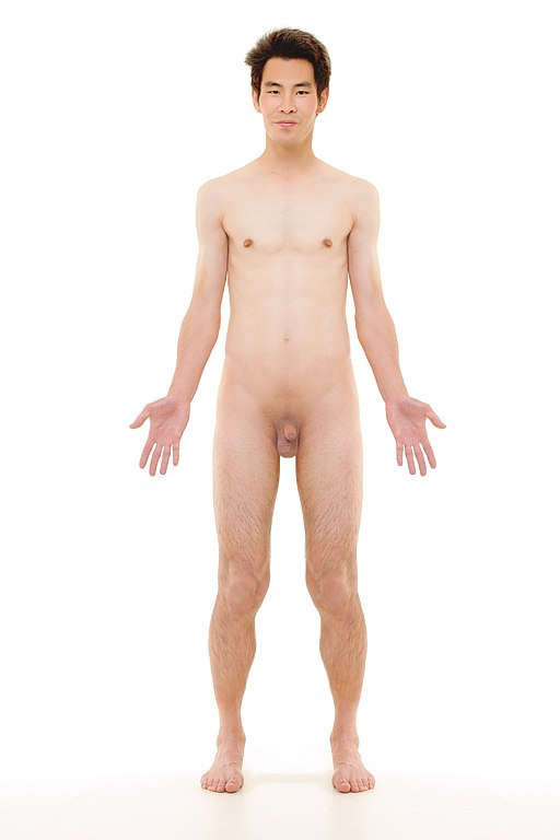 FileAnterior view of human male retouchedjpg