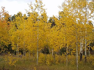 English: Autumn in the Bighorn Mountains just ...