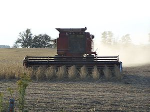 English: A Case IH combine harvesting soybeans...