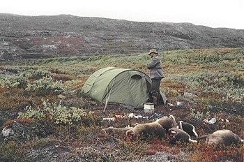 Reindeer hunting in Greenland  Wikipedia