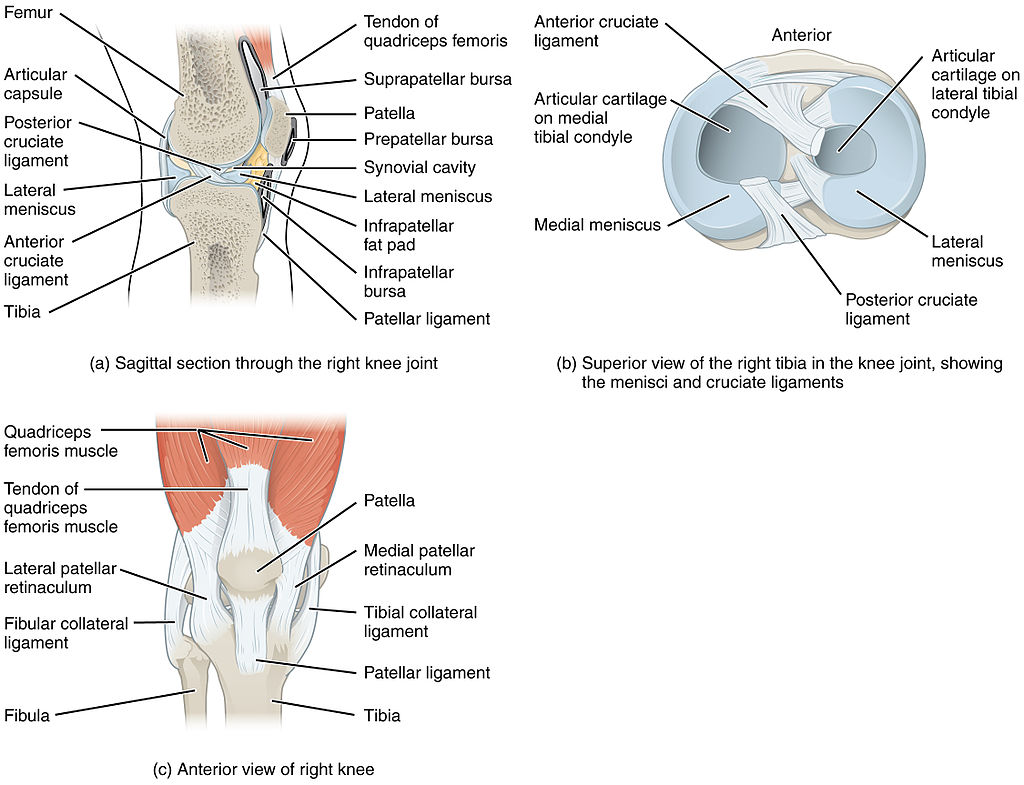 diagram of the knee and ligaments 2004 pontiac grand am wiring pain behind possible causes activate clinic
