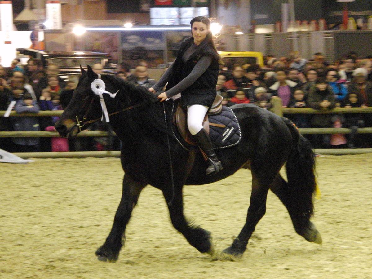 Castillonnais cheval  Wikipdia