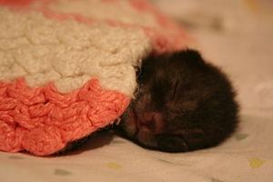 Kitten newborn