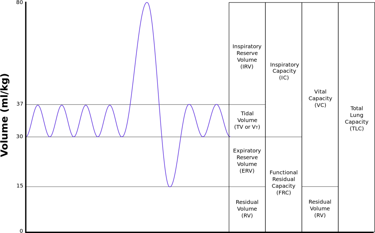 Lung volumes - Wikipedia