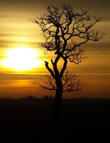 File:Solitary Tree at Dawn - geograph.org.uk - 708348.jpg