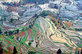 sawah abstrak di Yunnan, Cina