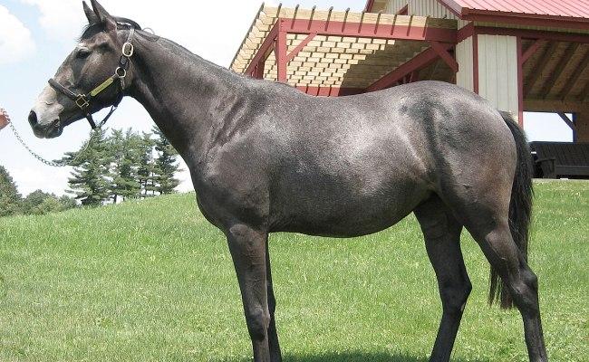 Horse Genome Wikipedia
