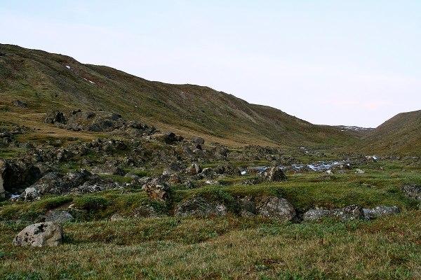 toundra du moyen-arctique wikipdia