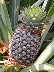 Bromelain is a plant extract used for reducing swelling (inflammation