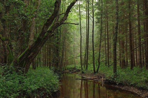 forestry in estonia - wikipedia