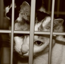 File:PrisonCat.jpg