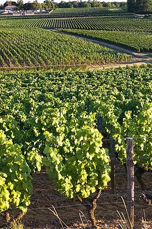 Village et vignoble, Sauternes, France.