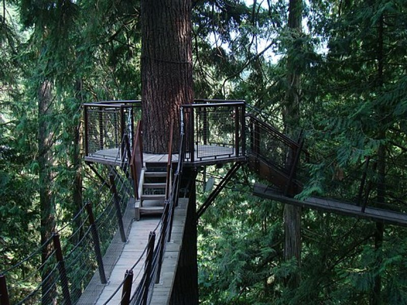Treetop Adventure in Capilano Suspension Bridge Park