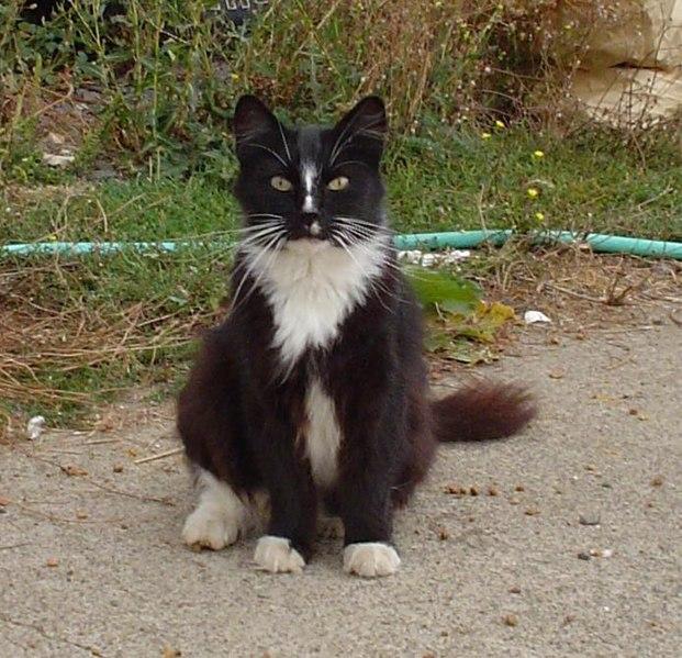 Fichier:Catboyblaze2.jpg