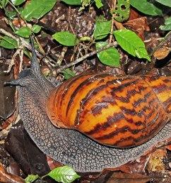 snail habitat diagram [ 1200 x 800 Pixel ]