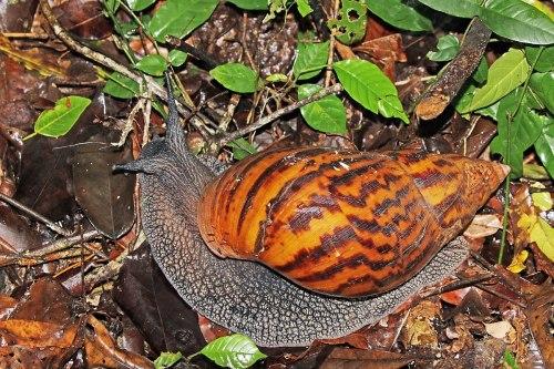 small resolution of snail habitat diagram