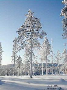 Laponie  Wikipdia