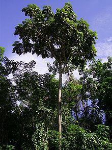 Mentawa  Wikipedia bahasa Indonesia ensiklopedia bebas