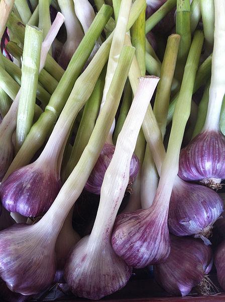 File:Purple Garlic.jpg