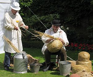 Making traditional beehives called skeps. Phot...