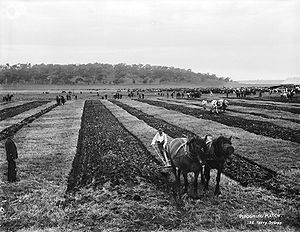 Single-sided ploughing in a ploughing match.