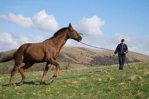 Horse Training Wattie Adams, exercising one of...