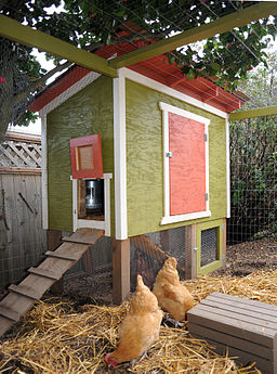 Seattle Chicken Coop and 2 Hens