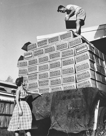 English: Boxes of Nooma puddings being unloaded.
