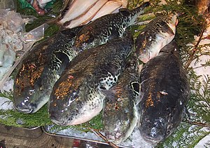 Torafugu for sale to master fugu chefs at the ...
