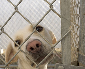 Photo of a dog behind a chain-link fence at th...