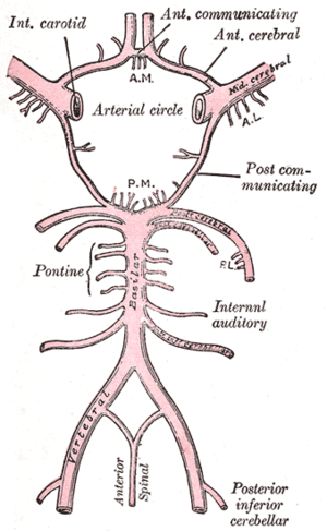 List of images in Gray's Anatomy: VI. The Arteries
