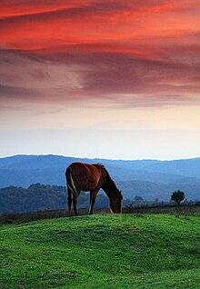 Horses  Wikiquote