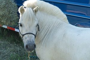 A pony with cropped mane