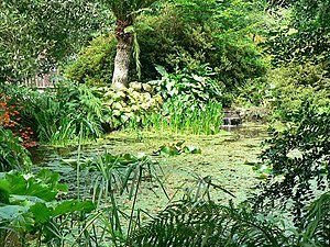English: Pond, Trengwainton Garden.