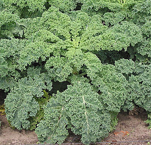 Eating Kale: Fear the Bitterness No Longer (1/2)