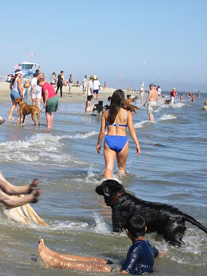 "English: ""Rosie's Dog Beach"" is the ..."