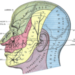 Trigeminal Nerve Diagram Club Car Golf Cart Lights Wiring Wikipedia Drawing Of The Head With Areas Served By Specific Nerves Color Coded