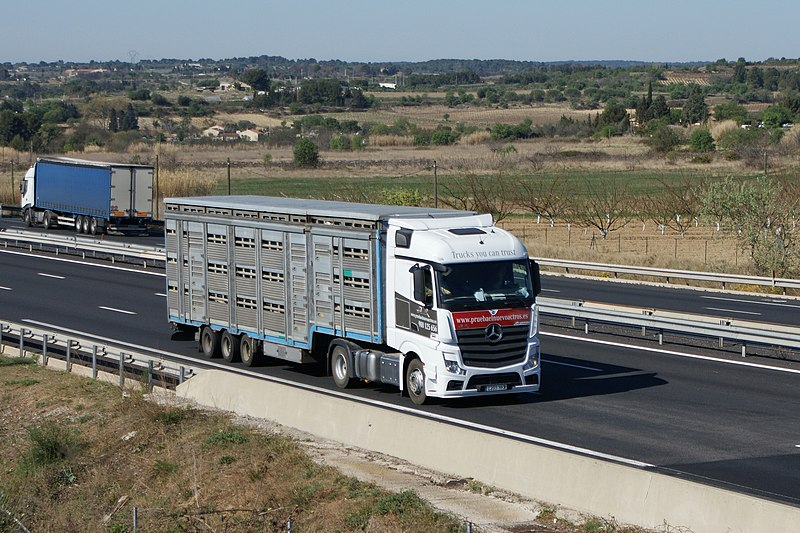 File:Livestock transport Mercedes-Benz Actros.jpg