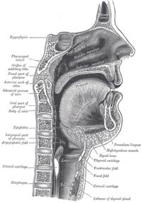 chimpanzee skull diagram sun path southern hemisphere bouche - wikipédia