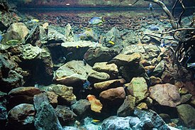 Aquarium with large stones of various shapes piled high. Some bare sticks are at right, and blue and yellow fish swim in the water.