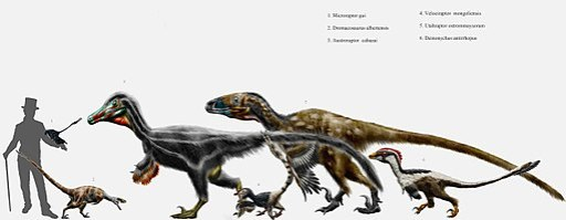 Dromaeosaurid parade by durbed