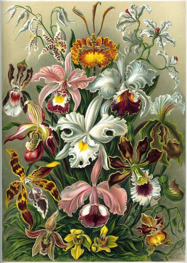 Orchidaceae - Wikipedia