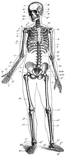 eye anatomy vintage diagram ford econoline radio wiring İnsan İskeletİ - uksnet blogcu.com