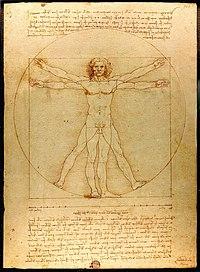 El Hombre de Vitruvio de Leonardo da Vinci.