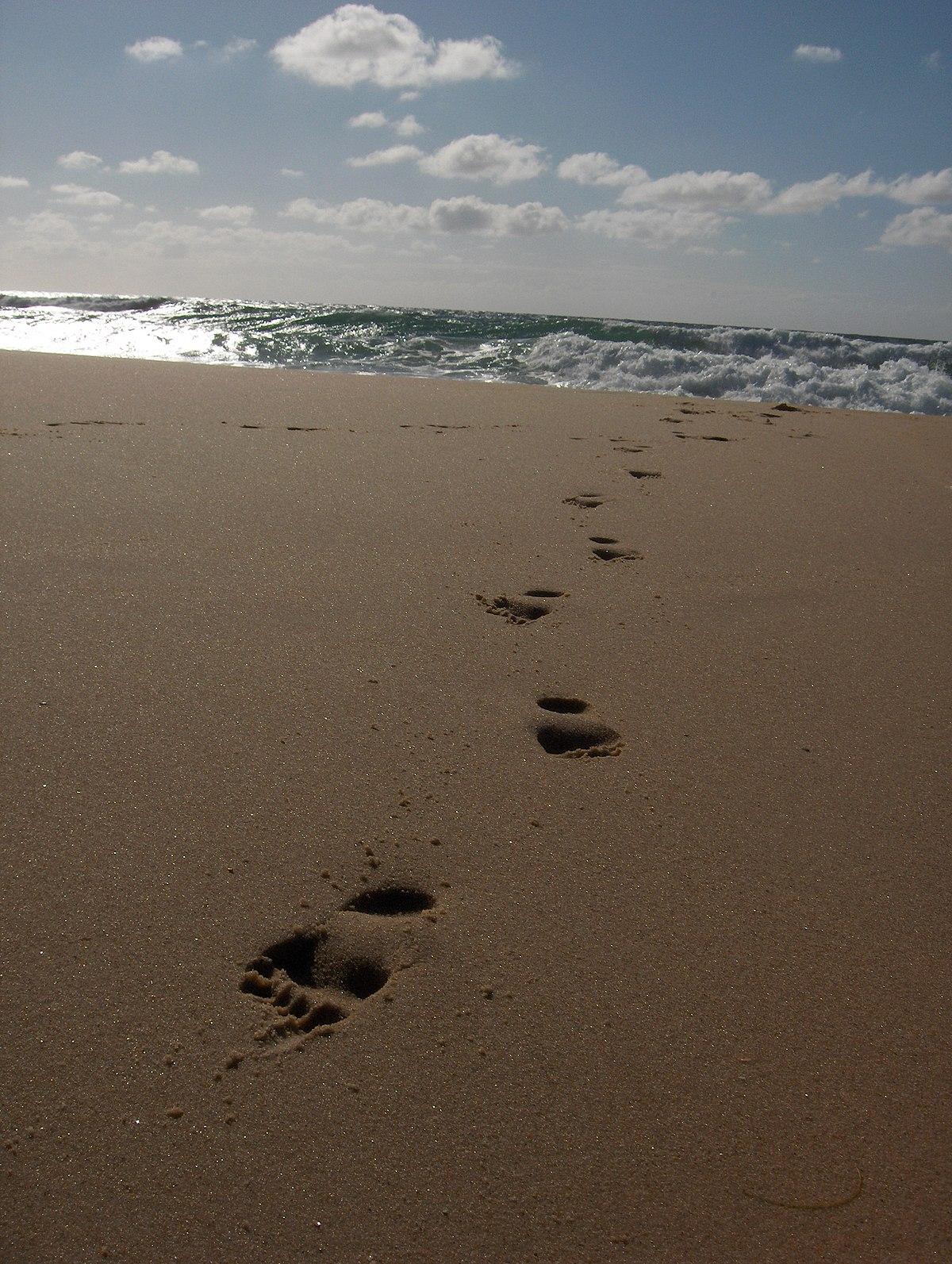 Trace De Pas Dans Le Sable : trace, sable, Trace, Wiktionnaire