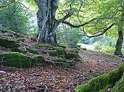 Bosque de la Sierra de Urbasa.